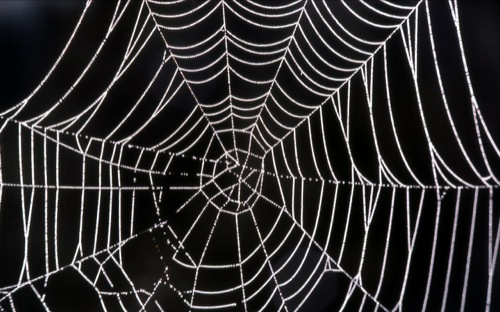 a spider web with dew on it