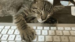 float-right Cats make websites good.